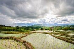 Campo di risaia a terrazze Fotografia Stock Libera da Diritti