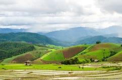 Campo di risaia a terrazze Fotografie Stock