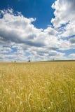 Campo di Rye in Baviera, Germania Immagine Stock Libera da Diritti
