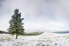 Campo di Snowy fotografia stock libera da diritti