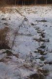 Campo di Snowy Fotografia Stock