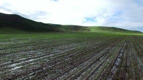 Campo di Solied vicino alle colline verdi stock footage