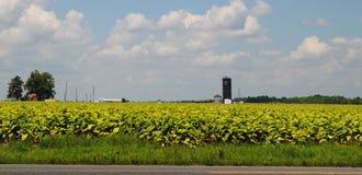Campo di tabacco con il silo blu fotografia stock
