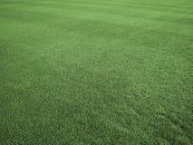 Campo di tappeto erboso perfetto Fotografia Stock Libera da Diritti