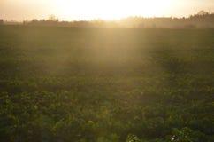 Campo di tramonto Immagini Stock Libere da Diritti