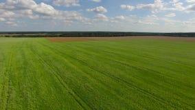 Campo di verde di erba del abowe della mosca video d archivio