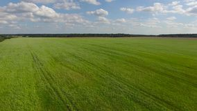 Campo di verde di erba del abowe della mosca archivi video