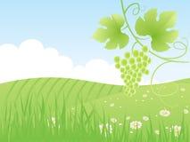 Campo di verde di estate e vite bei, Fotografia Stock