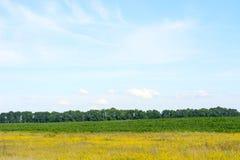 Campo di verde giallo contro il cielo blu Fotografie Stock Libere da Diritti