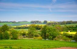 Campo di verde giallo del seme di ravizzone in primavera, fondo floreale stagionale di eco naturale astratto fotografia stock libera da diritti