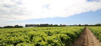 campo di verde sviluppato su suolo sabbioso di estate Fotografia Stock Libera da Diritti