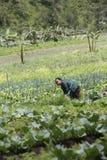 Campo di verdure Immagini Stock