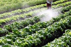 Campo di verdure Immagini Stock Libere da Diritti