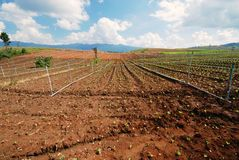 Campo di verdure Immagine Stock Libera da Diritti