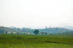 Campo di verdure Fotografia Stock Libera da Diritti