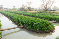 Campo di verdure dell'azienda agricola Fotografie Stock Libere da Diritti