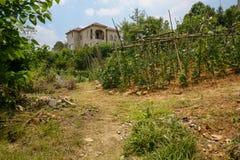 Campo di verdure di Hillside prima della villa nel pomeriggio soleggiato di estate immagine stock libera da diritti