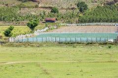 Campo di verdure verde dell'azienda agricola Fotografie Stock Libere da Diritti