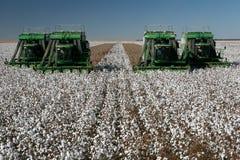 Campo do algodão