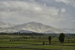 Campo do arroz, campos Imagens de Stock