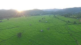 Campo do arroz com metragem de bambu da antena da cabana vídeos de arquivo