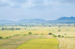Campo do arroz com montanha Foto de Stock Royalty Free