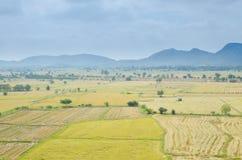 Campo do arroz com montanha Foto de Stock