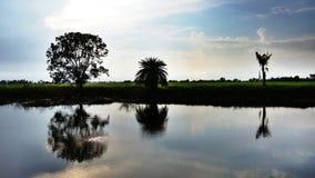 campo do arroz com o lago na obscuridade Fotos de Stock