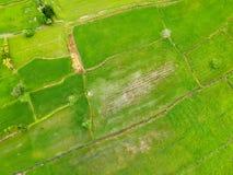 Campo do arroz da vista aérea em Tailândia foto de stock royalty free