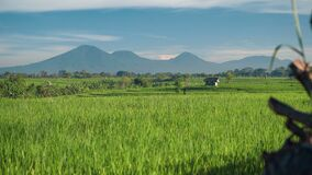 Campo do arroz de Canggu com o vulcão de Batur da montagem no fundo filme