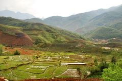 Campo do arroz do terraço em Sapa Imagens de Stock