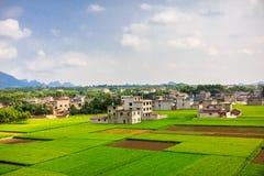 Campo do arroz em Ásia imagens de stock royalty free