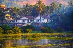 Campo do arroz em Goa, Índia no por do sol Imagens de Stock Royalty Free
