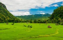 Campo do arroz em Huai Pha Foto de Stock Royalty Free