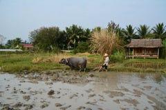 Campo do arroz em Laos Fotos de Stock