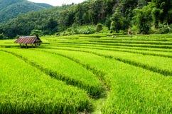 Campo do arroz em terraced Imagens de Stock Royalty Free