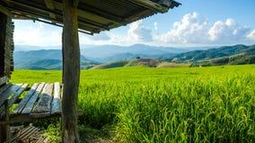 Campo do arroz em terraced Imagem de Stock