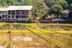 Campo do arroz na estrada, Goa Fotos de Stock