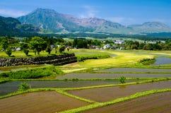 Campo do arroz na frente das montanhas Fotos de Stock Royalty Free