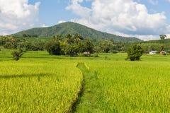 Campo do arroz na manhã em Tailândia Fotos de Stock