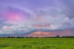 Campo do arroz no fundo do céu do por do sol em Tailândia Imagem de Stock
