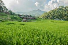 Campo do arroz no norte de Tailândia Imagem de Stock Royalty Free