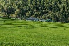 Campo do arroz no norte de Tailândia imagens de stock royalty free