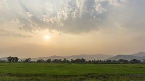 Campo do arroz no por do sol imagem de stock