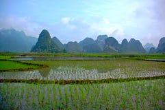 Campo do arroz no vale foto de stock royalty free