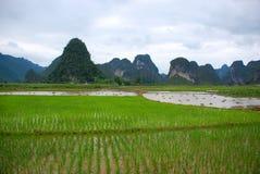 Campo do arroz no vale Imagem de Stock Royalty Free