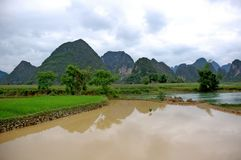 Campo do arroz no vale Imagem de Stock