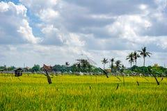 Campo do arroz, palmeiras e casas, paisagem rural, ilha de Bali, Indonésia fotografia de stock royalty free