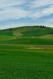 Campo do céu e de trigo imagens de stock royalty free