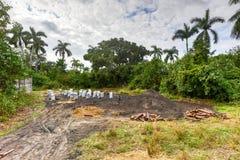 Campo do carvão vegetal - Vinales, Cuba fotos de stock